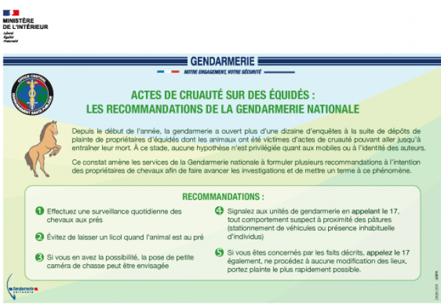 tafe-infographie-chevaux-mutiles_1.png